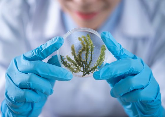 INTERESTINGLY FUN FACTS ABOUT BIOTECHNOLOGY